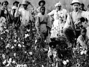 A História Do Algodão