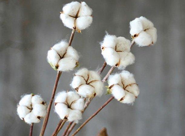 Como é feito o tecido de algodão egípcio